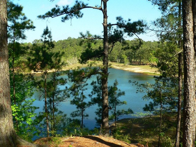 Kisatchie National Forest, a Louisiana natlforest